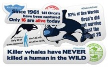 "View the ""10 FREE Orca Whale Stickers (Freebie)"" coupon page"